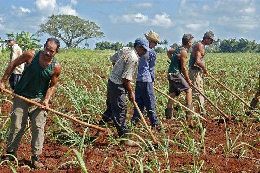Cuba abre la industria azucarera a la inversión extranjera